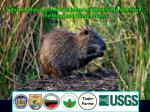a partnership approach to invasive species management the maryland nutria project