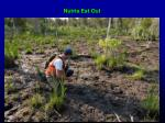 nutria eat out