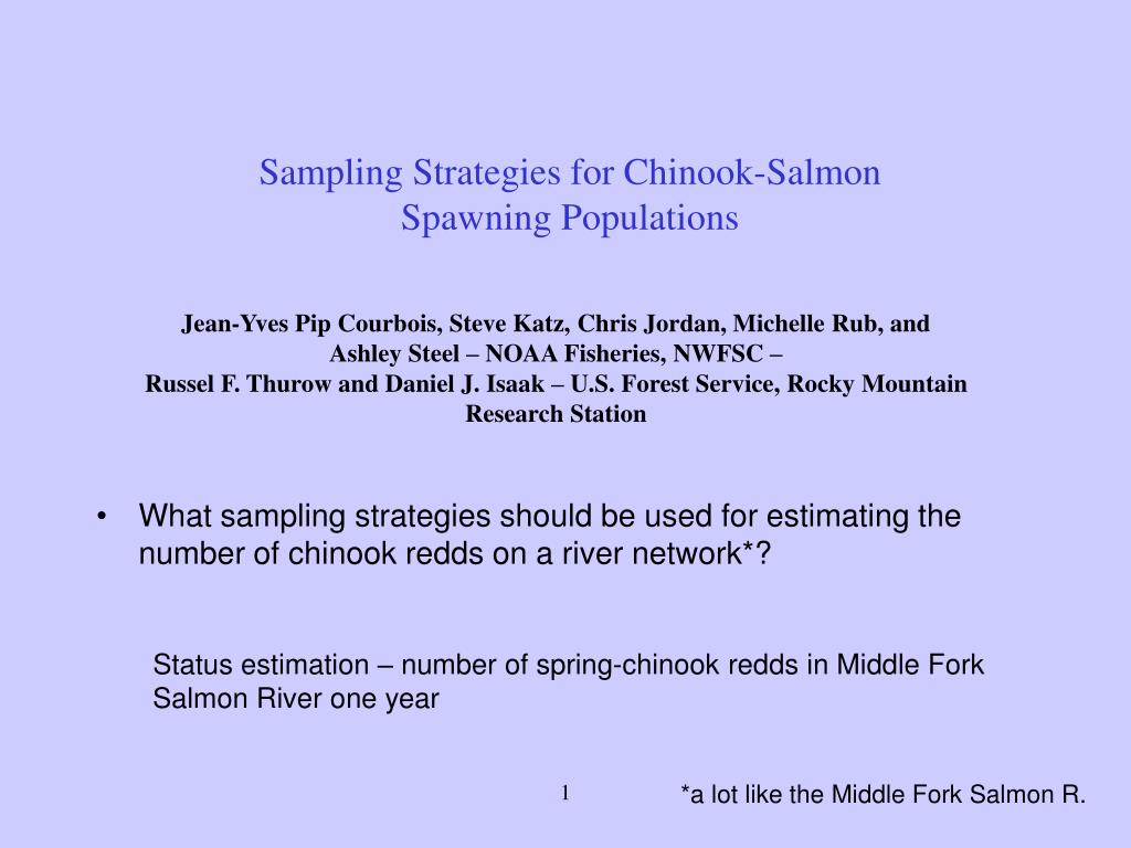 sampling strategies for chinook salmon spawning populations l.