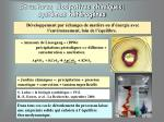 structures dissipatives chimiques syst mes h t rog nes