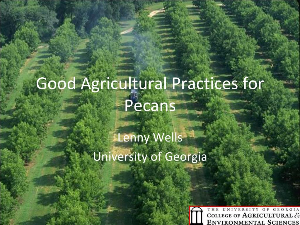 good agricultural practices for pecans l.