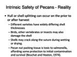 intrinsic safety of pecans reality