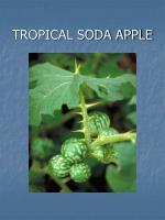 tropical soda apple
