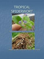 tropical spiderwort15