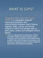 what is caps