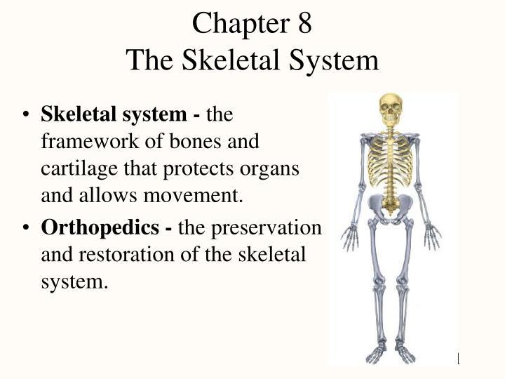 chapter 8 the skeletal system n.