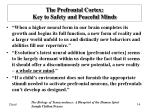 the prefrontal cortex key to safety and peaceful minds