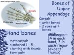 bones of upper appendage68
