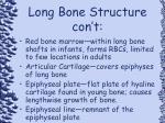 long bone structure con t