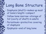 long bone structure