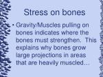 stress on bones