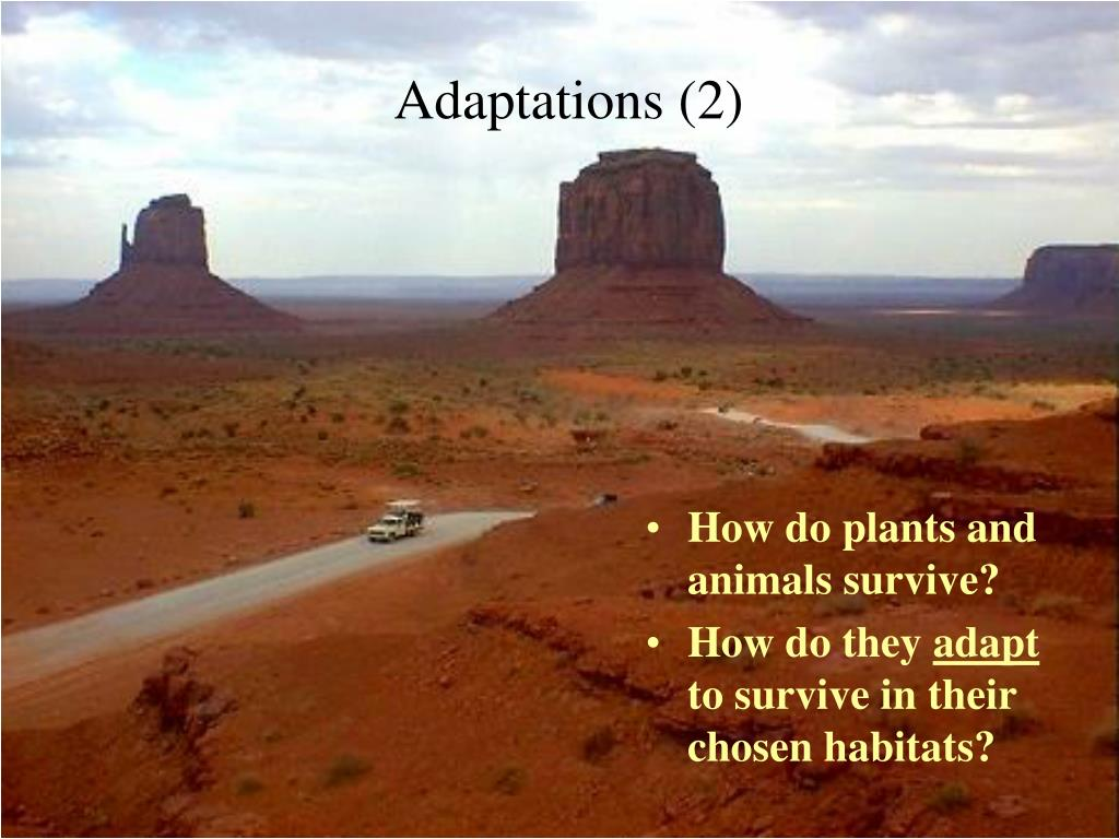 adaptations 2 l.