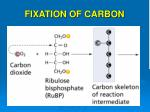 fixation of carbon