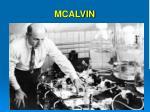 mcalvin