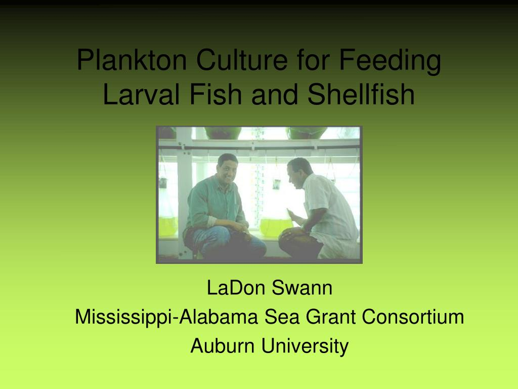 plankton culture for feeding larval fish and shellfish l.