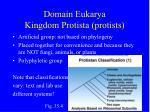 domain eukarya kingdom protista protists7