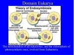 domain eukarya4