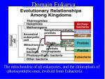 domain eukarya5