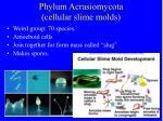 phylum acrasiomycota cellular slime molds