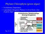 phylum chlorophyta green algae36