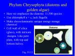 phylum chrysophyta diatoms and golden algae