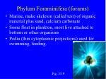 phylum foraminifera forams