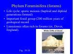phylum foraminifera forams16