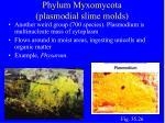 phylum myxomycota plasmodial slime molds