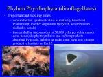 phylum phyrrhophyta dinoflagellates19