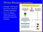 phylum rhizopoda amoebas13