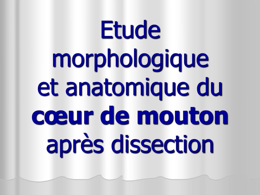 etude morphologique et anatomique du c ur de mouton apr s dissection l.