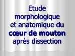 etude morphologique et anatomique du c ur de mouton apr s dissection