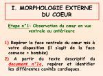 i morphologie externe du coeur