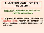 i morphologie externe du coeur5