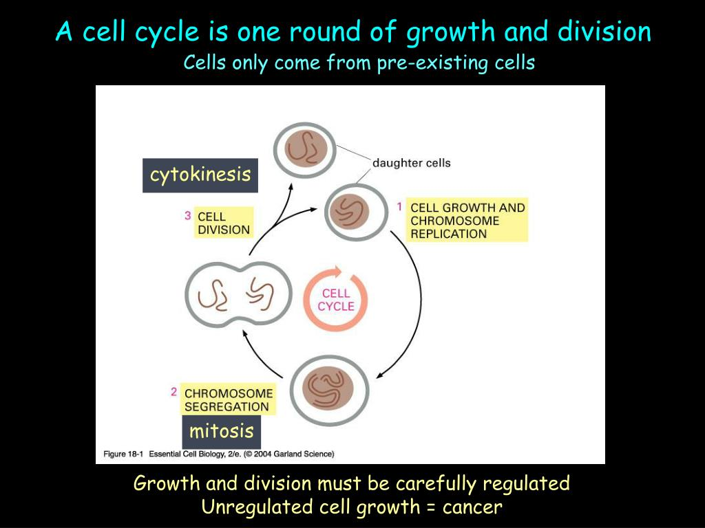 A cell cycle is one round of growth and division