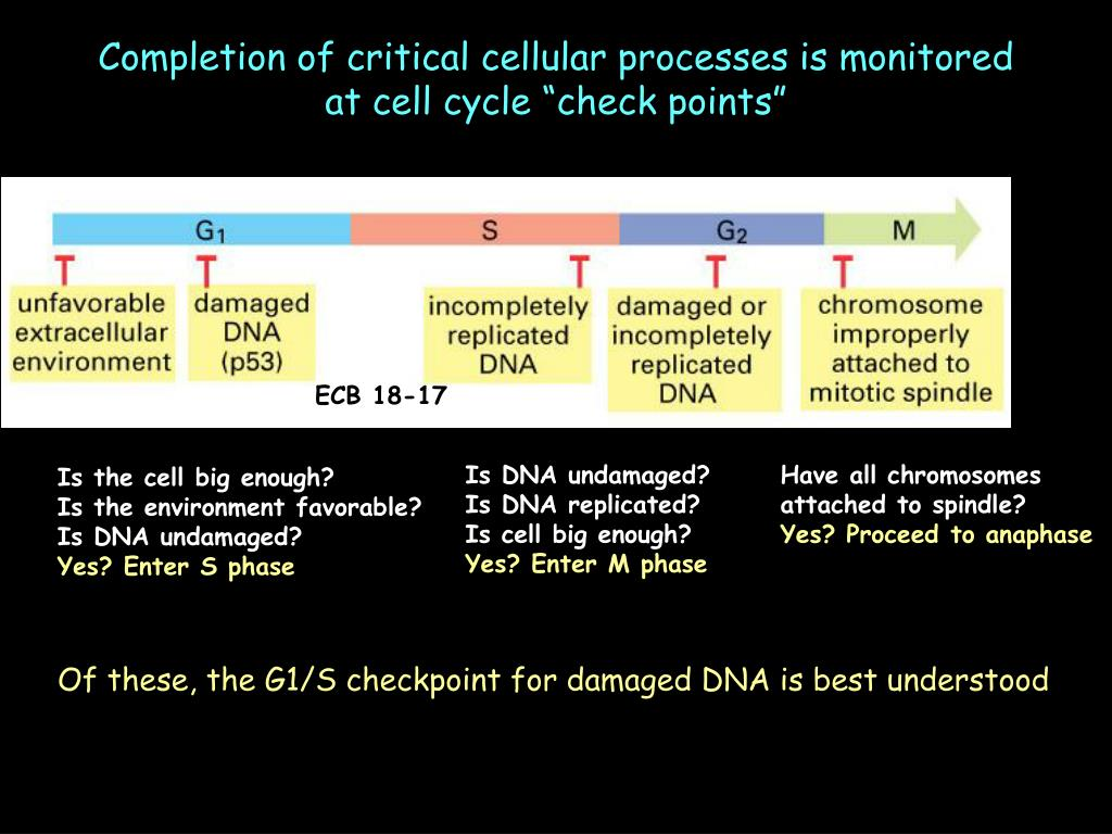 """Completion of critical cellular processes is monitored at cell cycle """"check points"""""""