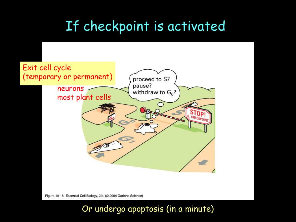 If checkpoint is activated