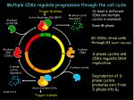 multiple cdks regulate progression through the cell cycle