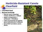 herbicide resistant canola clearfield
