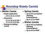 roundup ready canola