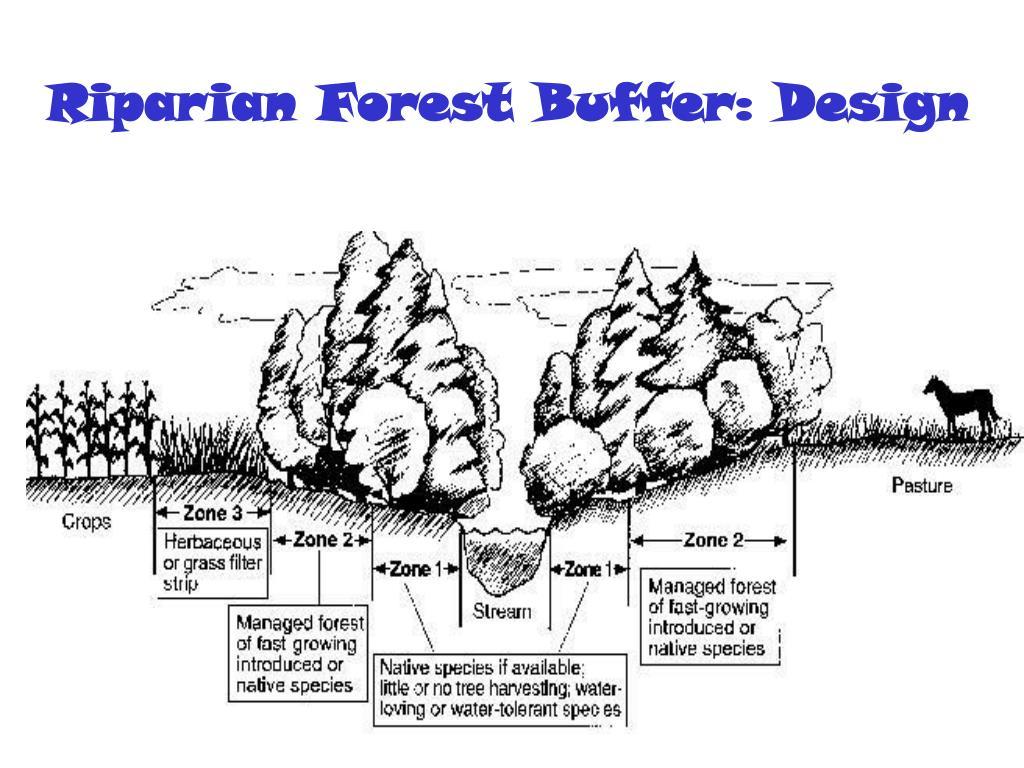 Riparian Forest Buffer: Design