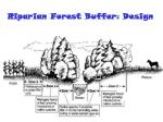 riparian forest buffer design