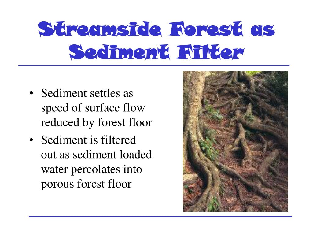 Streamside Forest as Sediment Filter