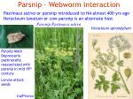 parsnip webworm interaction