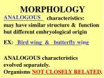 morphology1