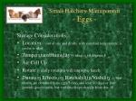 small hatchery management eggs1