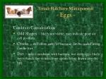 small hatchery management eggs2