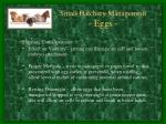 small hatchery management eggs3