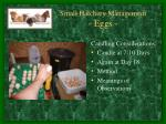 small hatchery management eggs4