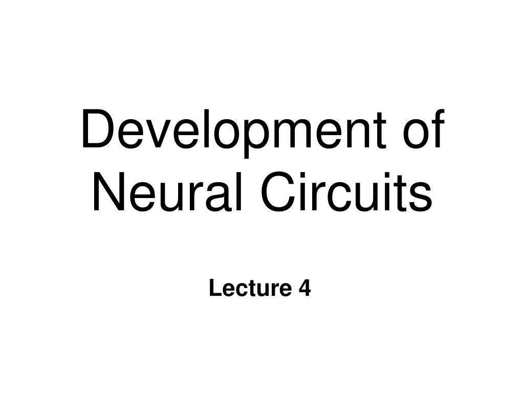 development of neural circuits l.